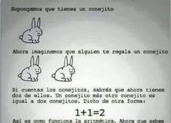 Enlace a Las mates en realidad son tan sencillas como contar conejitos