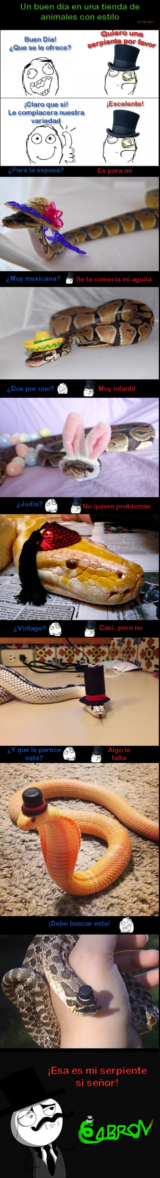Feel_like_a_sir - Buscando la serpiente con más clase, ¿con cuál te quedarías tú?