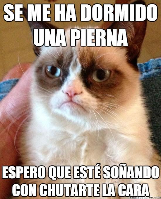 Grumpy_cat - La pierna dormida de Grumpy Cat