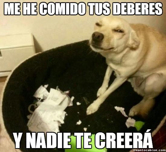 Meme_otros - Los perros son buenos hasta que se cansan de serlo y no puedes hacer nada contra eso
