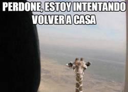 Enlace a La jirafa más alta del mundo
