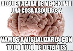 Enlace a Así funciona el cerebro humano