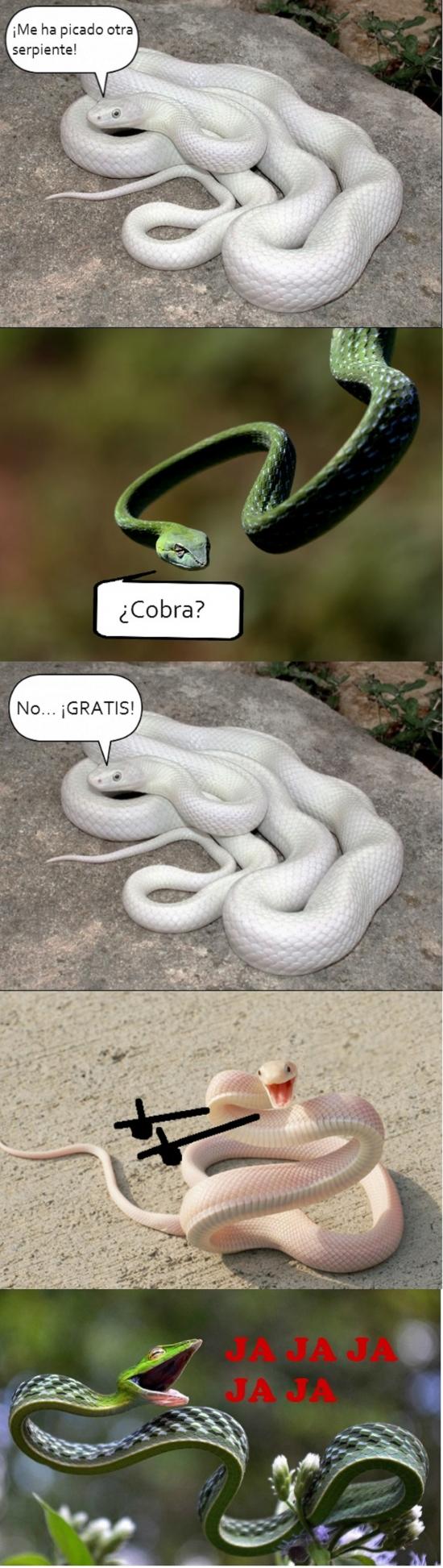 Otros - Las serpientes pueden ser muy enrolladas