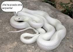 Enlace a Las serpientes pueden ser muy enrolladas