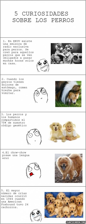 Otros - 5 Curiosidades sobre perros