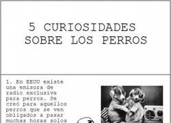 Enlace a 5 Curiosidades sobre perros