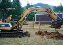 Enlace a No te imaginarías NUNCA quién ha aprendido a conducir esta excavadora