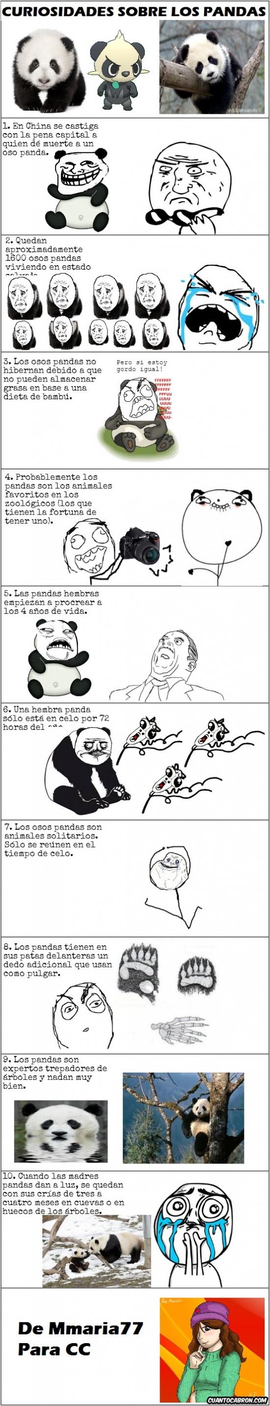 Otros - 10 cosas que no sabías sobre los pandas