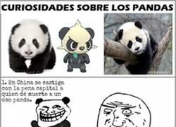 Enlace a 10 cosas que no sabías sobre los pandas