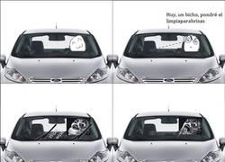 Enlace a Cuando ves un bicho en el parabrisas de tu coche