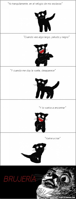 Inglip - Los gatos y el misterio de su propia cola