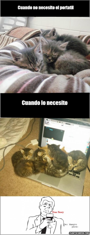 Otros - Los gatitos y su don de la inoportunidad