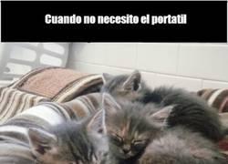Enlace a Los gatitos y su don de la inoportunidad