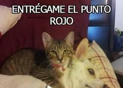 Enlace a Se acabó el juego, el gato quiere el punto rojo y sabe cómo conseguirlo