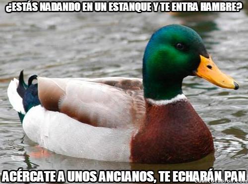 Pato_consejero - El consejo más auto-biográfico que ha dado nunca este pato