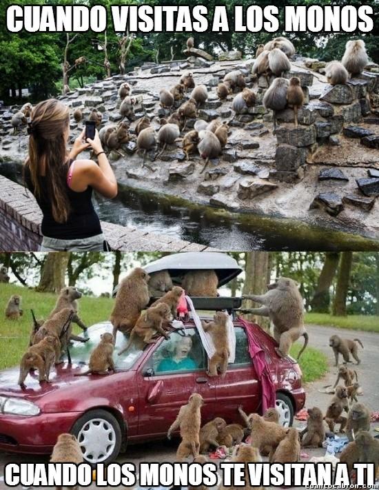 Meme_otros - Estos monos son unos gamberros