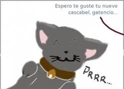Enlace a No a todos los gatos les hace gracia un cascabel
