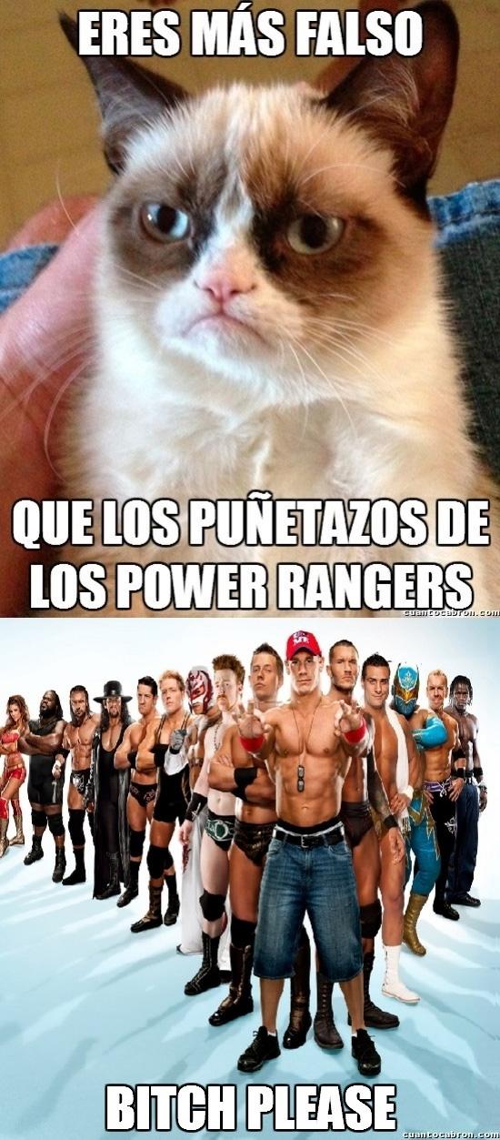Meme_otros - Mira gato, si tenemos que hablar de falsedad...