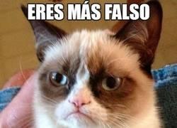 Enlace a Mira gato, si tenemos que hablar de falsedad...