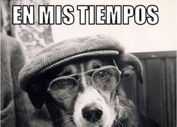Enlace a En mis tiempos caninos...