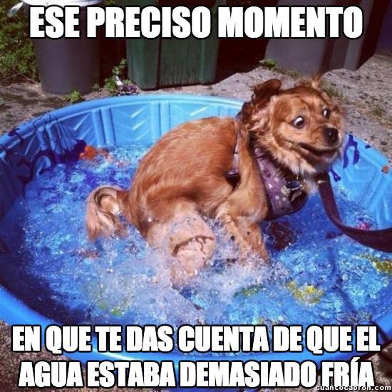 Agua,Ese preciso momento,Frio,Invierno,Perro,Verano