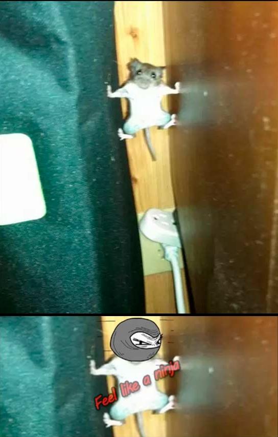 Feel_like_a_ninja - Este raton tiene un gran futuro como ninja