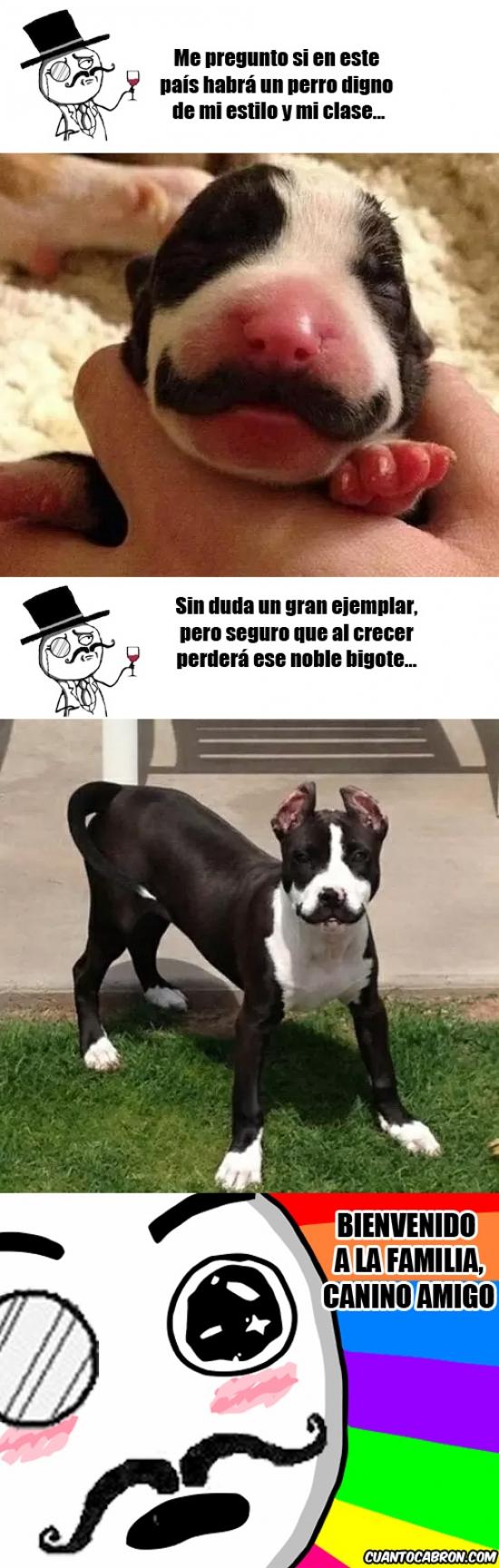 Feel_like_a_sir - El perro que un Sir se merece
