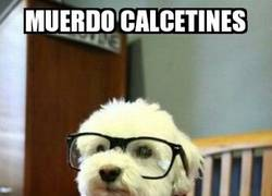 Enlace a Perro hipster