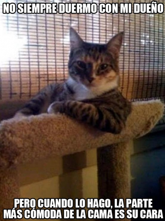 Meme_otros - Es mejor no dormir con tu gato