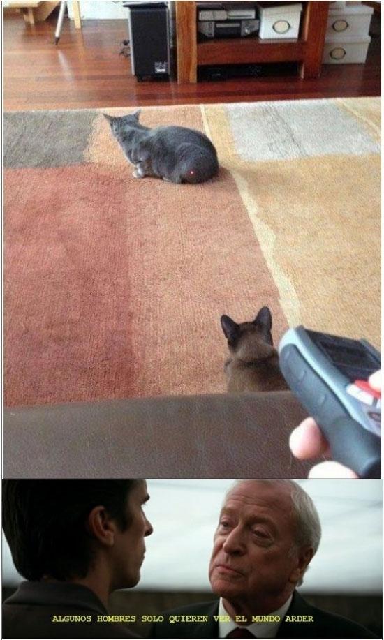 alfred,batman,gatos,laser,maldad
