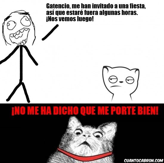 Inglip - ¿Qué le dices a tu gato cada vez que te vas de casa?
