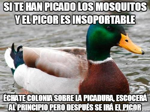 Pato_consejero - Consejo para aliviar las picadoras de mosquitos casi al instante