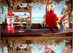 Enlace a ¿Sabes el anuncio del guacamayo que se congela?
