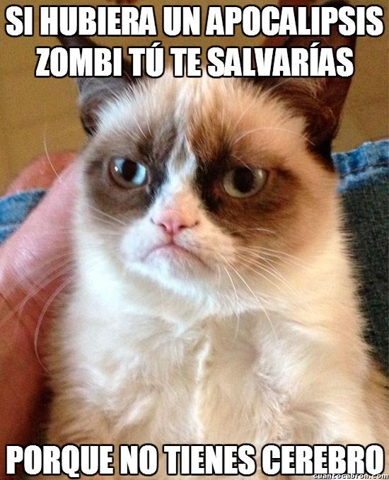 Grumpy_cat - Hay muchas maneras de insultar, pero por encima de todo, sutileza