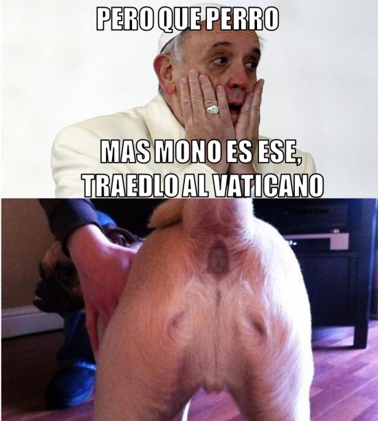 Meme_otros - El perro del Papa Francisco