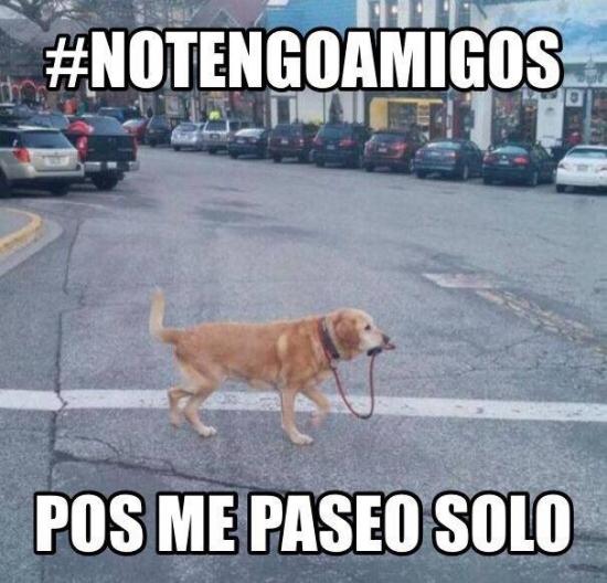 Meme_otros - Perros que no necesitan a nadie