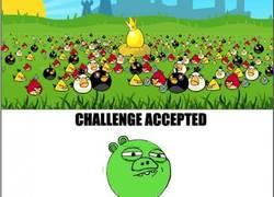 Enlace a Los cerdos del Angry Birds no tienen miedo a nada