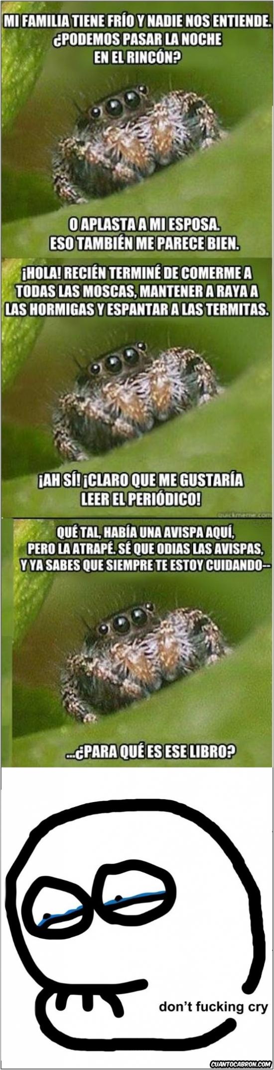 Araña,Casa,don't cry,Llorar,No mateis por matar,Pobrecitas
