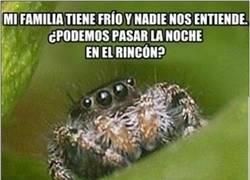 Enlace a Arañas desde otra perspectiva