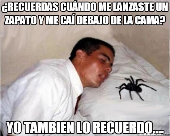 Meme_otros - Las arañas tambien saben planear venganzas