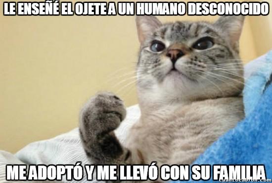 Meme_otros - ¡Con todos ustedes, Success Cat!