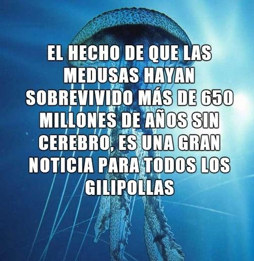 Meme_otros - Las medusas tienen mucho en común con ciertas personas