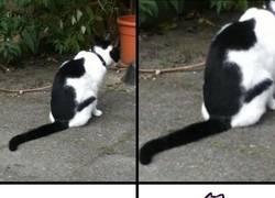 Enlace a El gato que todo Pokémaniaco querría tener