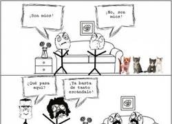 Enlace a El dilema de los gatitos