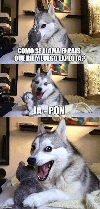 Meme_otros - El perro cómico