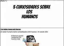 Enlace a Curiosidades sobre los humanos