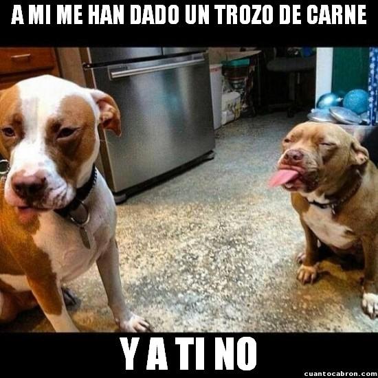 Meme_otros - El perro burlón