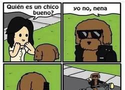 Enlace a El perro