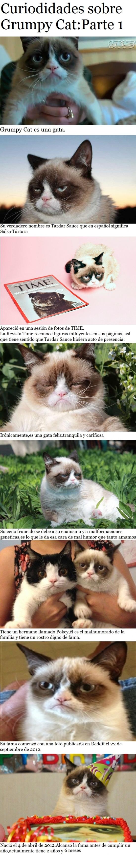 Grumpy_cat - Si te gusta el meme de Grumpy Cat, debes saber estas cosas