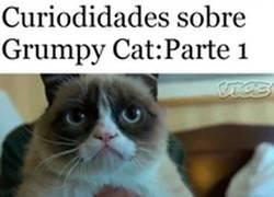 Enlace a Si te gusta el meme de Grumpy Cat, debes saber estas cosas